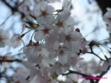 +++ りり☆Blog evolution +++ 広島在住OLの何かやらかしてる日記(ゝω・)o-20100403_038.jpg
