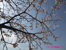 +++ りり☆Blog evolution +++ 広島在住OLの何かやらかしてる日記(ゝω・)o-20100403_055.jpg