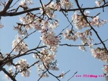+++ りり☆Blog evolution +++ 広島在住OLの何かやらかしてる日記(ゝω・)o-20100403_056.jpg