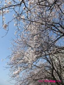 +++ りり☆Blog evolution +++ 広島在住OLの何かやらかしてる日記(ゝω・)o-20100403_058.jpg