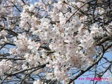 +++ りり☆Blog evolution +++ 広島在住OLの何かやらかしてる日記(ゝω・)o-20100403_059.jpg