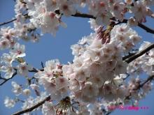 +++ りり☆Blog evolution +++ 広島在住OLの何かやらかしてる日記(ゝω・)o-20100403_069.jpg