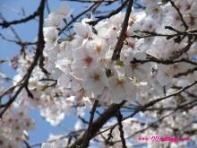 +++ りり☆Blog evolution +++ 広島在住OLの何かやらかしてる日記(ゝω・)o-20100403_072.jpg