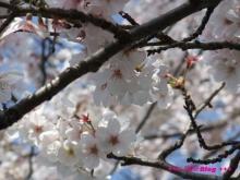 +++ りり☆Blog evolution +++ 広島在住OLの何かやらかしてる日記(ゝω・)o-20100403_073.jpg