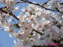 +++ りり☆Blog evolution +++ 広島在住OLの何かやらかしてる日記(ゝω・)o-20100403_075.jpg