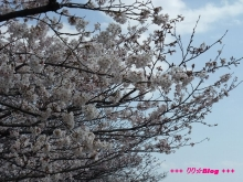 +++ りり☆Blog evolution +++ 広島在住OLの何かやらかしてる日記(ゝω・)o-20100403_095.jpg