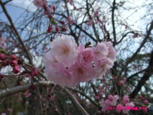 +++ りり☆Blog evolution +++ 広島在住OLの何かやらかしてる日記(ゝω・)o-20100403_097.jpg