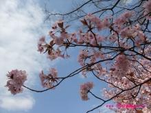 +++ りり☆Blog evolution +++ 広島在住OLの何かやらかしてる日記(ゝω・)o-20100403_113.jpg