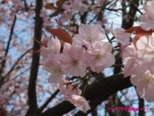 +++ りり☆Blog evolution +++ 広島在住OLの何かやらかしてる日記(ゝω・)o-20100403_116.jpg