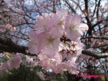 +++ りり☆Blog evolution +++ 広島在住OLの何かやらかしてる日記(ゝω・)o-20100403_117.jpg