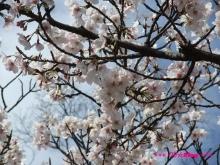 +++ りり☆Blog evolution +++ 広島在住OLの何かやらかしてる日記(ゝω・)o-20100403_118.jpg