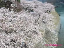 +++ りり☆Blog evolution +++ 広島在住OLの何かやらかしてる日記(ゝω・)o-20100404_038.jpg