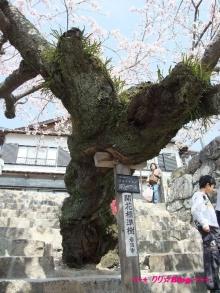 +++ りり☆Blog evolution +++ 広島在住OLの何かやらかしてる日記(ゝω・)o-20100404_051.jpg