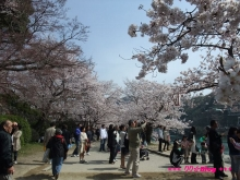 +++ りり☆Blog evolution +++ 広島在住OLの何かやらかしてる日記(ゝω・)o-20100404_059.jpg