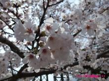 +++ りり☆Blog evolution +++ 広島在住OLの何かやらかしてる日記(ゝω・)o-20100404_062.jpg