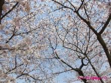 +++ りり☆Blog evolution +++ 広島在住OLの何かやらかしてる日記(ゝω・)o-20100404_084.jpg