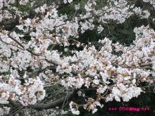 +++ りり☆Blog evolution +++ 広島在住OLの何かやらかしてる日記(ゝω・)o-20100404_141.jpg