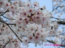 +++ りり☆Blog evolution +++ 広島在住OLの何かやらかしてる日記(ゝω・)o-20100404_156.jpg