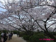 +++ りり☆Blog evolution +++ 広島在住OLの何かやらかしてる日記(ゝω・)o-20100404_172.jpg