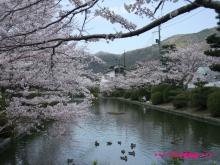 +++ りり☆Blog evolution +++ 広島在住OLの何かやらかしてる日記(ゝω・)o-20100404_176.jpg