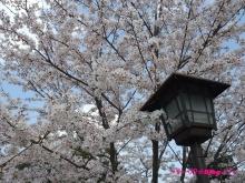 +++ りり☆Blog evolution +++ 広島在住OLの何かやらかしてる日記(ゝω・)o-20100404_191.jpg
