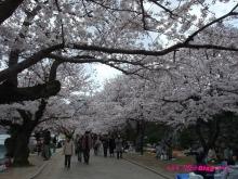 +++ りり☆Blog evolution +++ 広島在住OLの何かやらかしてる日記(ゝω・)o-20100404_202.jpg