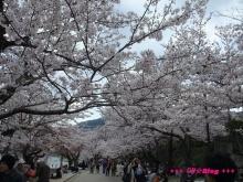 +++ りり☆Blog evolution +++ 広島在住OLの何かやらかしてる日記(ゝω・)o-20100404_205.jpg