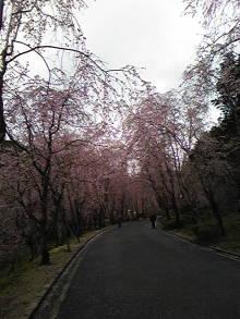 +++ りり☆Blog evolution +++ 広島在住OLの何かやらかしてる日記(ゝω・)o-DVC00206.jpg