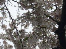 +++ りり☆Blog evolution +++ 広島在住OLの何かやらかしてる日記(ゝω・)o-20100413_076.jpg