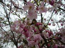 +++ りり☆Blog evolution +++ 広島在住OLの何かやらかしてる日記(ゝω・)o-20100413_088.jpg