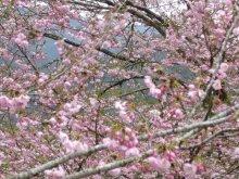 +++ りり☆Blog evolution +++ 広島在住OLの何かやらかしてる日記(ゝω・)o-20100413_097.jpg
