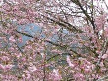 +++ りり☆Blog evolution +++ 広島在住OLの何かやらかしてる日記(ゝω・)o-20100413_098.jpg