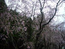 +++ りり☆Blog evolution +++ 広島在住OLの何かやらかしてる日記(ゝω・)o-20100413_135.jpg