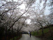 +++ りり☆Blog evolution +++ 広島在住OLの何かやらかしてる日記(ゝω・)o-20100413_139.jpg