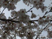 +++ りり☆Blog evolution +++ 広島在住OLの何かやらかしてる日記(ゝω・)o-20100413_141.jpg