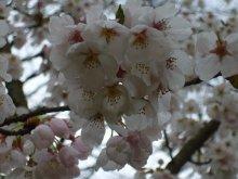 +++ りり☆Blog evolution +++ 広島在住OLの何かやらかしてる日記(ゝω・)o-20100413_142.jpg