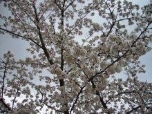 +++ りり☆Blog evolution +++ 広島在住OLの何かやらかしてる日記(ゝω・)o-20100413_149.jpg