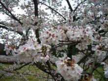 +++ りり☆Blog evolution +++ 広島在住OLの何かやらかしてる日記(ゝω・)o-20100413_151.jpg