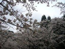 +++ りり☆Blog evolution +++ 広島在住OLの何かやらかしてる日記(ゝω・)o-20100413_162.jpg