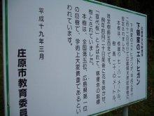 +++ りり☆Blog evolution +++ 広島在住OLの何かやらかしてる日記(ゝω・)o-20100413_222.jpg