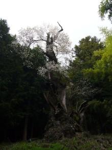 +++ りり☆Blog evolution +++ 広島在住OLの何かやらかしてる日記(ゝω・)o-20100413_212.jpg