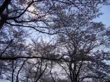 +++ りり☆Blog evolution +++ 広島在住OLの何かやらかしてる日記(ゝω・)o-20100413_241.jpg
