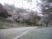 +++ りり☆Blog evolution +++ 広島在住OLの何かやらかしてる日記(ゝω・)o-20100413_262.jpg