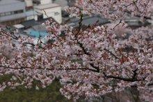 +++ りり☆Blog evolution +++ 広島在住OLの何かやらかしてる日記(ゝω・)o-20100413_000.jpg