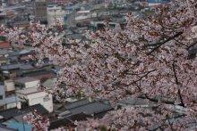 +++ りり☆Blog evolution +++ 広島在住OLの何かやらかしてる日記(ゝω・)o-20100413_001.jpg
