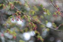 +++ りり☆Blog evolution +++ 広島在住OLの何かやらかしてる日記(ゝω・)o-20100413_024.jpg