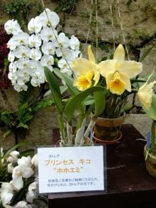 +++ りり☆Blog evolution +++ 広島在住OLの何かやらかしてる日記(ゝω・)o-20100418_081.jpg