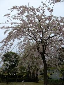 +++ りり☆Blog evolution +++ 広島在住OLの何かやらかしてる日記(ゝω・)o-20100418_204.jpg