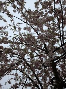 +++ りり☆Blog evolution +++ 広島在住OLの何かやらかしてる日記(ゝω・)o-20100418_205.jpg