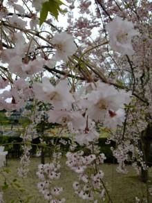 +++ りり☆Blog evolution +++ 広島在住OLの何かやらかしてる日記(ゝω・)o-20100418_210.jpg